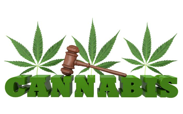 cannabis - marijuana legalization - free stock photo
